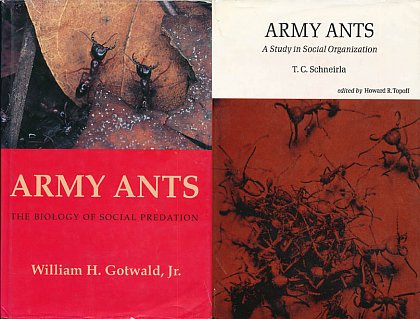 An analysis of the many ant species in biology